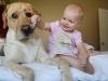 8731360-r3l8t8d-650-top-15-des-bebes-avec-leurs-grands-chiens-85846